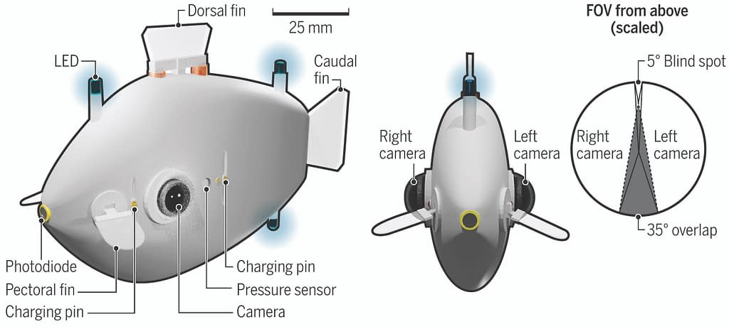 Diagram of a fish-shaped robot